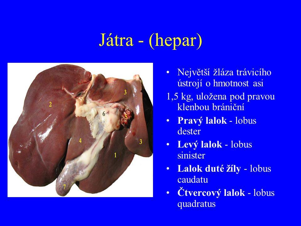 Játra - (hepar) Největší žláza trávicího ústrojí o hmotnost asi