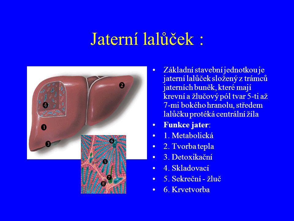 Jaterní lalůček :