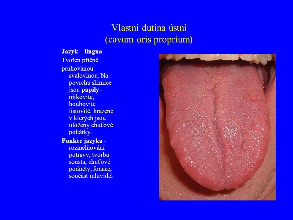 Vlastní dutina ústní (cavum oris proprium)