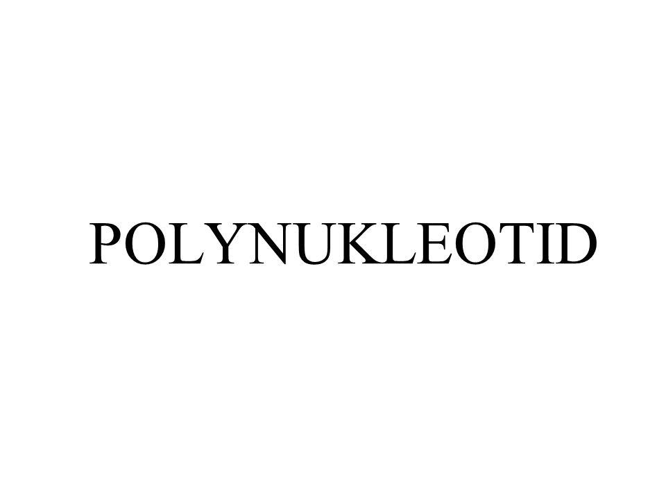 POLYNUKLEOTID