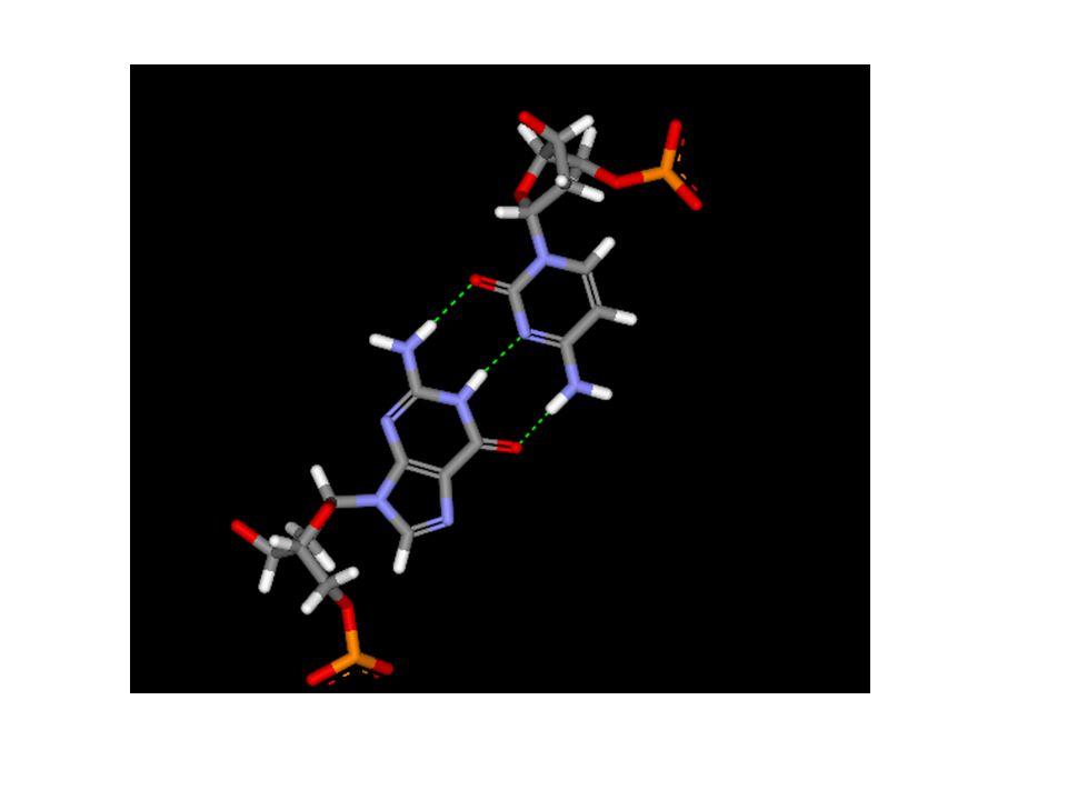 Trojná vodíková vazba (C na G)
