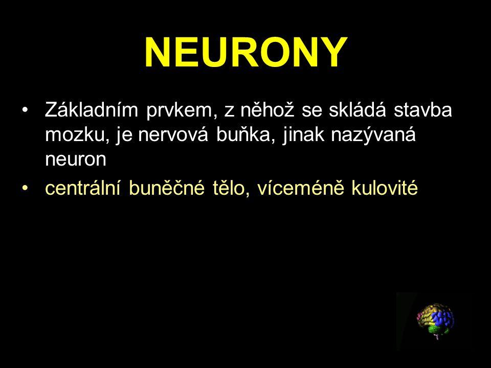 NEURONY Základním prvkem, z něhož se skládá stavba mozku, je nervová buňka, jinak nazývaná neuron.