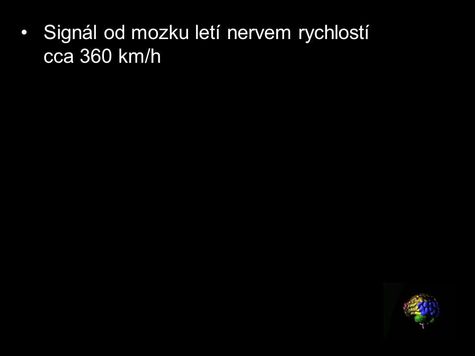 Signál od mozku letí nervem rychlostí cca 360 km/h