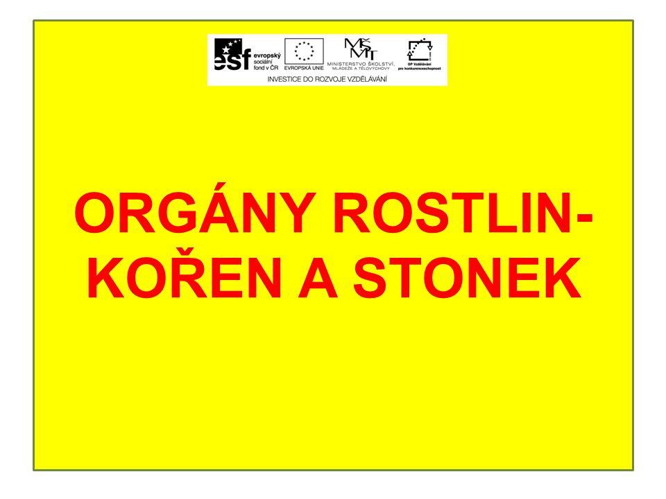 ORGÁNY ROSTLIN-KOŘEN A STONEK