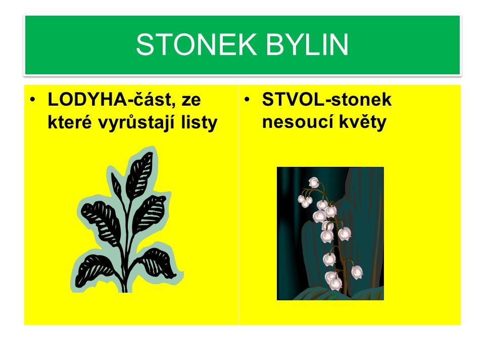 STONEK BYLIN LODYHA-část, ze které vyrůstají listy