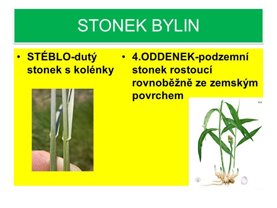STONEK BYLIN STÉBLO-dutý stonek s kolénky