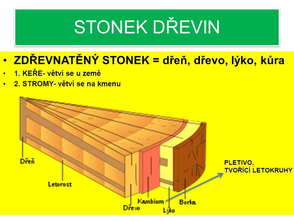 STONEK DŘEVIN ZDŘEVNATĚNÝ STONEK = dřeň, dřevo, lýko, kůra