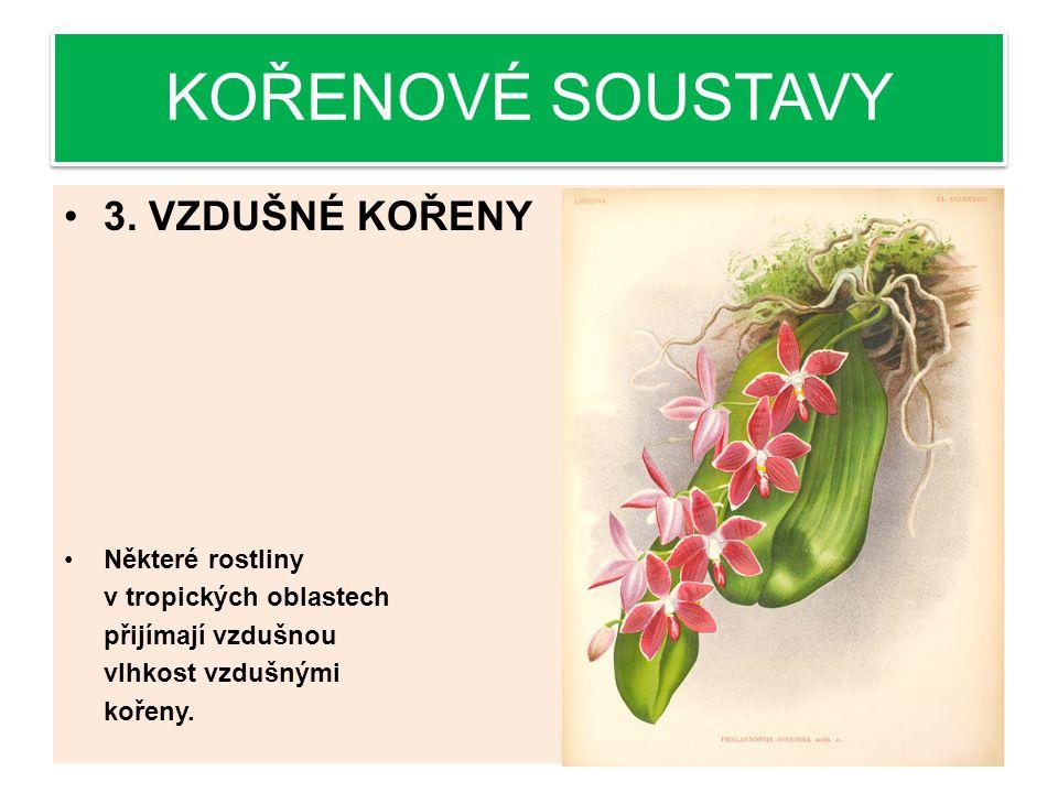 KOŘENOVÉ SOUSTAVY 3. VZDUŠNÉ KOŘENY Některé rostliny