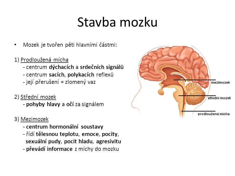 Stavba mozku Mozek je tvořen pěti hlavními částmi: