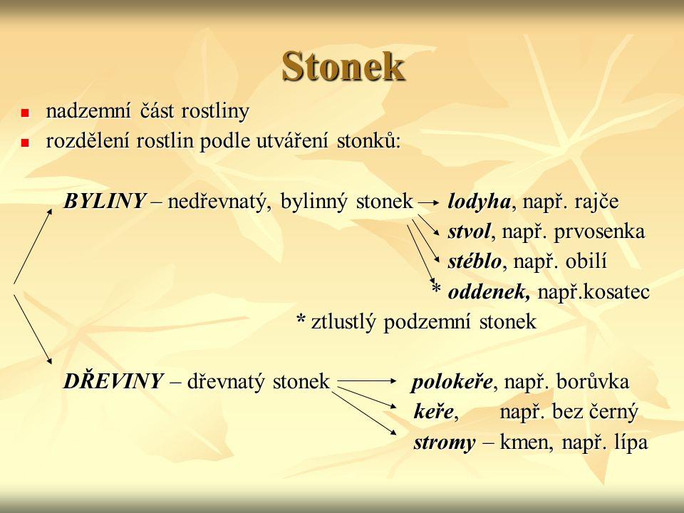 Stonek nadzemní část rostliny rozdělení rostlin podle utváření stonků: