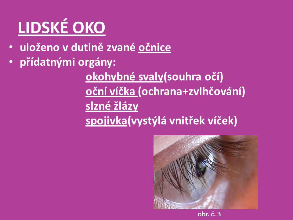LIDSKÉ OKO uloženo v dutině zvané očnice přídatnými orgány: