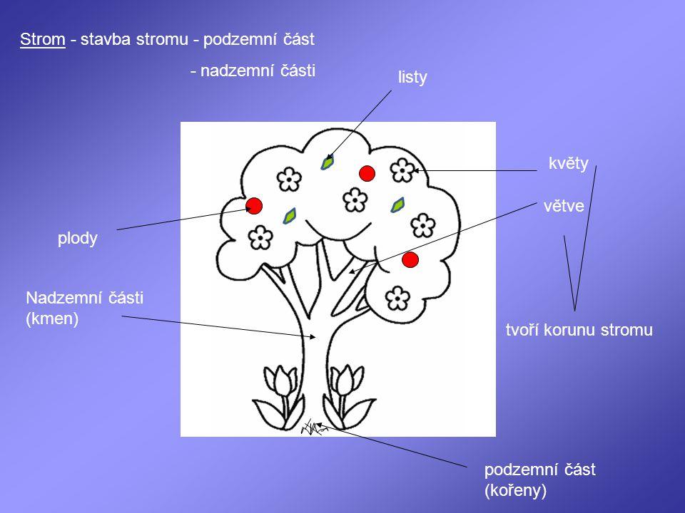 Strom - stavba stromu - podzemní část