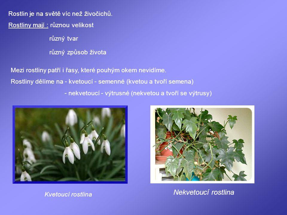 Nekvetoucí rostlina Rostlin je na světě víc než živočichů.