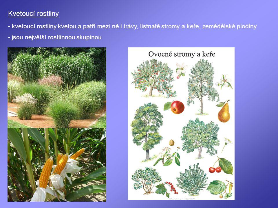 Kvetoucí rostliny - kvetoucí rostliny kvetou a patří mezi ně i trávy, listnaté stromy a keře, zemědělské plodiny.