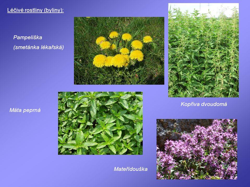 Léčivé rostliny (byliny):