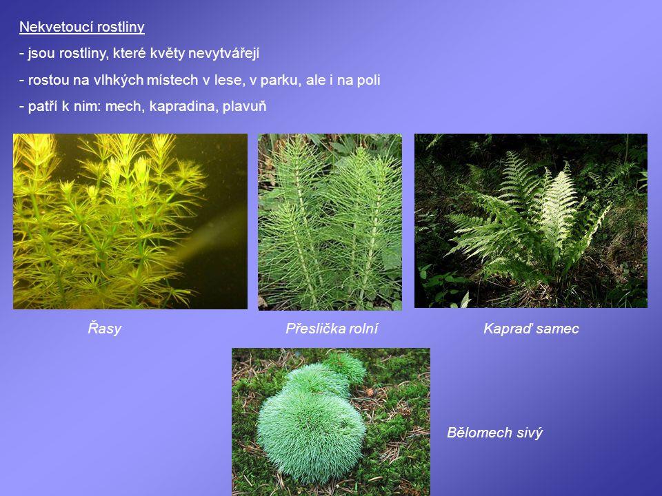Nekvetoucí rostliny - jsou rostliny, které květy nevytvářejí. - rostou na vlhkých místech v lese, v parku, ale i na poli.
