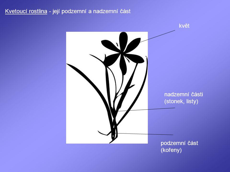 Kvetoucí rostlina - její podzemní a nadzemní část