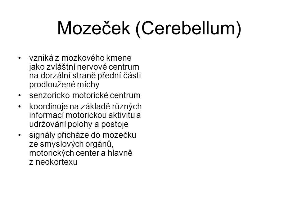 Mozeček (Cerebellum) vzniká z mozkového kmene jako zvláštní nervové centrum na dorzální straně přední části prodloužené míchy.