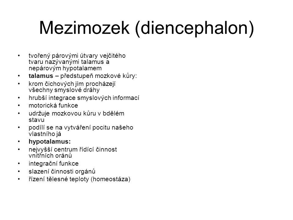Mezimozek (diencephalon)