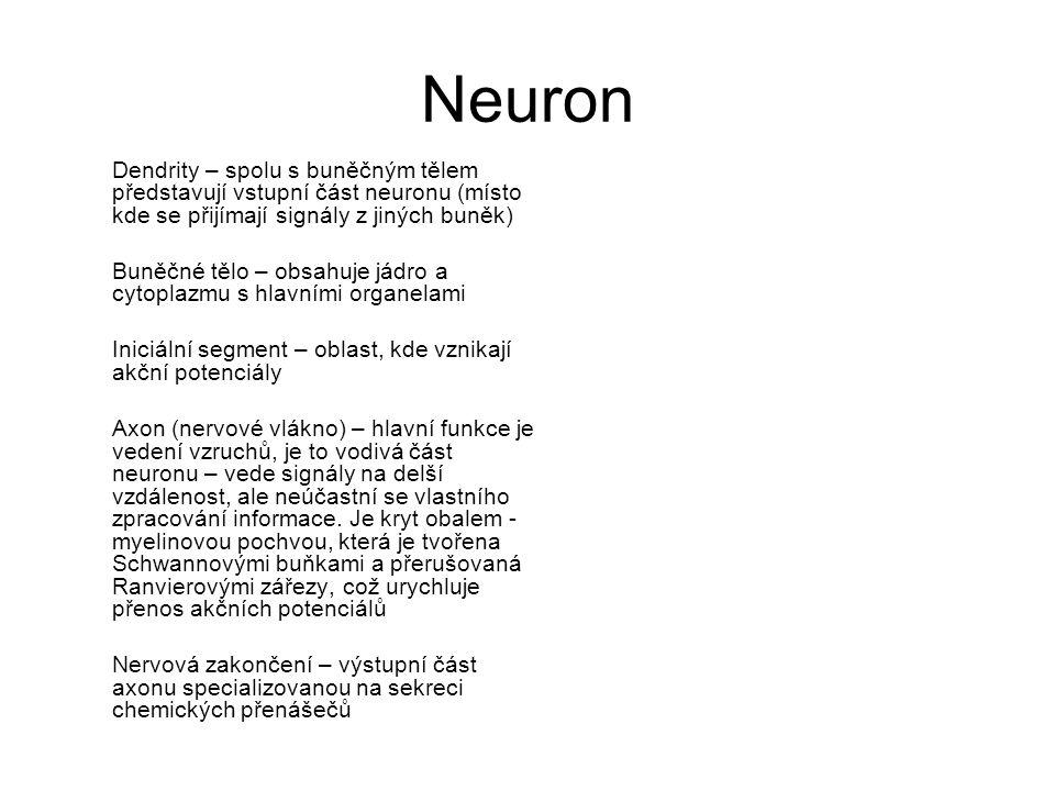 Neuron Dendrity – spolu s buněčným tělem představují vstupní část neuronu (místo kde se přijímají signály z jiných buněk)