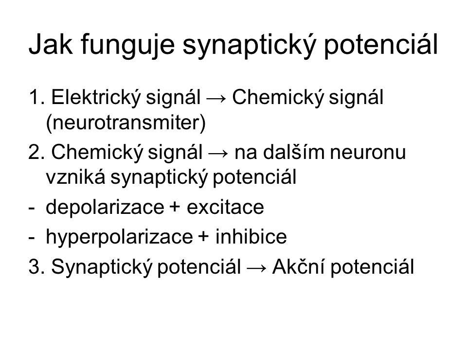 Jak funguje synaptický potenciál