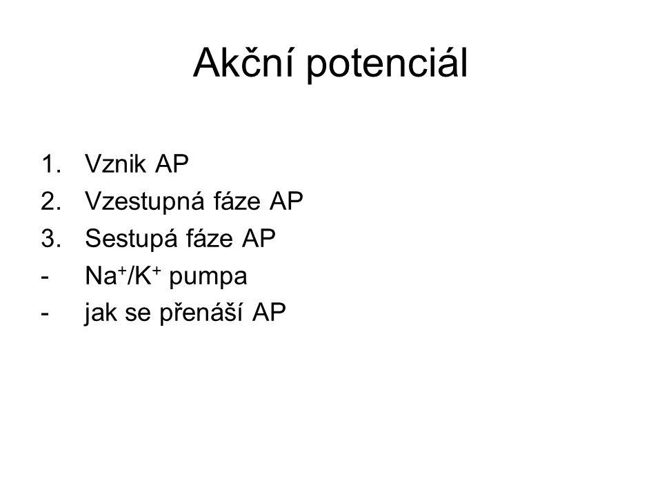 Akční potenciál Vznik AP Vzestupná fáze AP Sestupá fáze AP