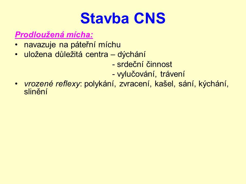 Stavba CNS Mozek 5 základních částí: koncový mozek mezimozek