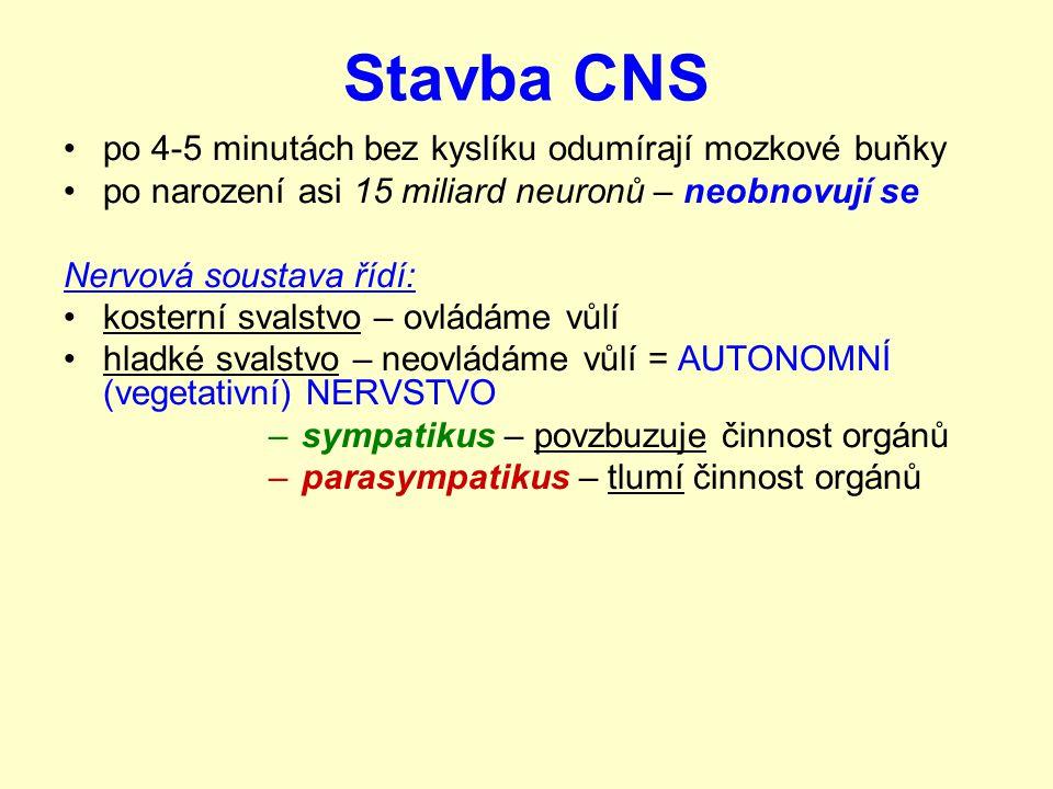 Stavba CNS Koncový mozek: největší část mozku