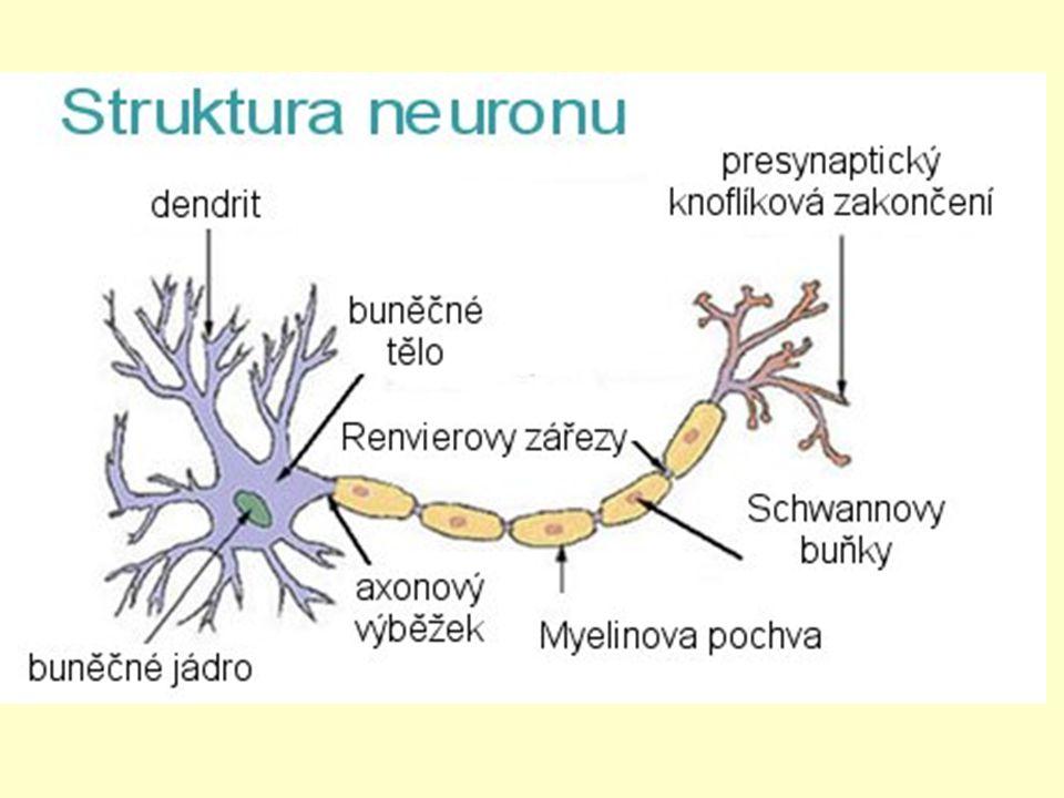 Nervová soustava funkce řídí činnost všech orgánů