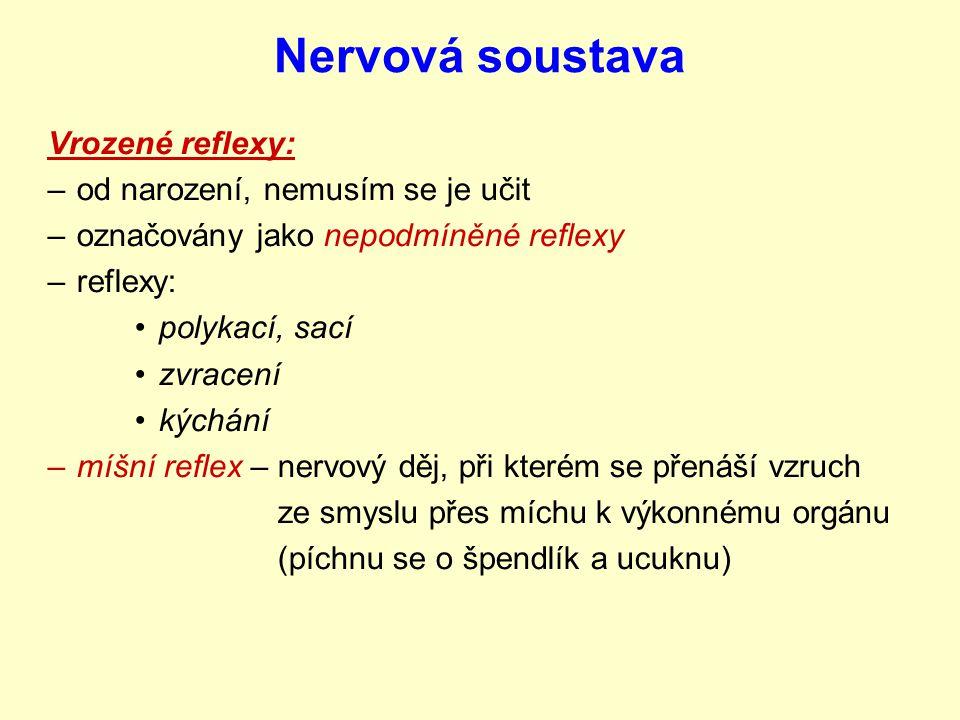Nervová soustava Reflexy = odpověď organismu na podněty reflexy