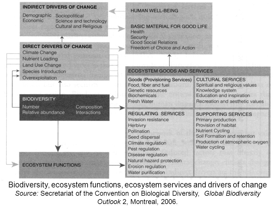 Biodiversity, ecosystem functions, ecosystem services and drivers of change Source: Secretariat of the Convention on Biological Diversity, Global Biodiversity Outlook 2, Montreal, 2006.