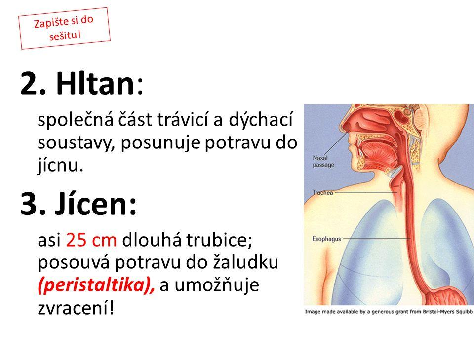 Zapište si do sešitu! 2. Hltan: společná část trávicí a dýchací soustavy, posunuje potravu do jícnu.