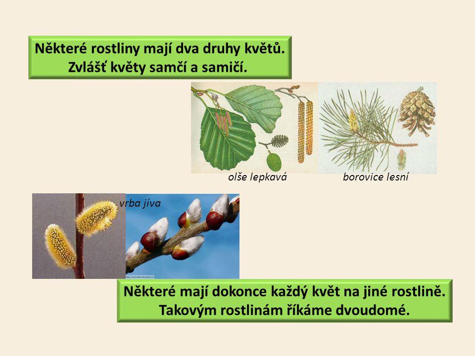 Některé rostliny mají dva druhy květů. Zvlášť květy samčí a samičí.