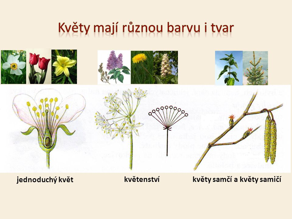 Květy mají různou barvu i tvar