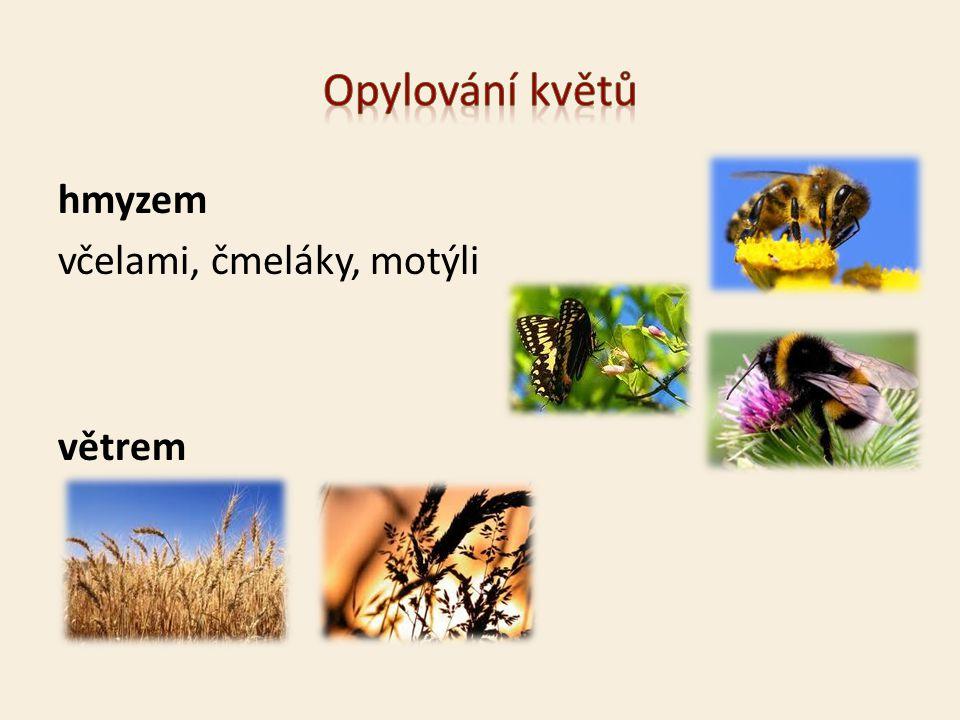 Opylování květů hmyzem včelami, čmeláky, motýli větrem