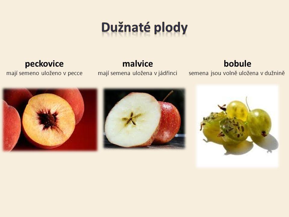Dužnaté plody peckovice malvice bobule mají semeno uloženo v pecce