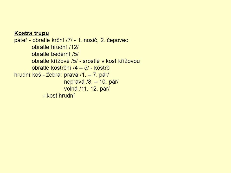 Kostra trupu páteř - obratle krční /7/ - 1. nosič, 2