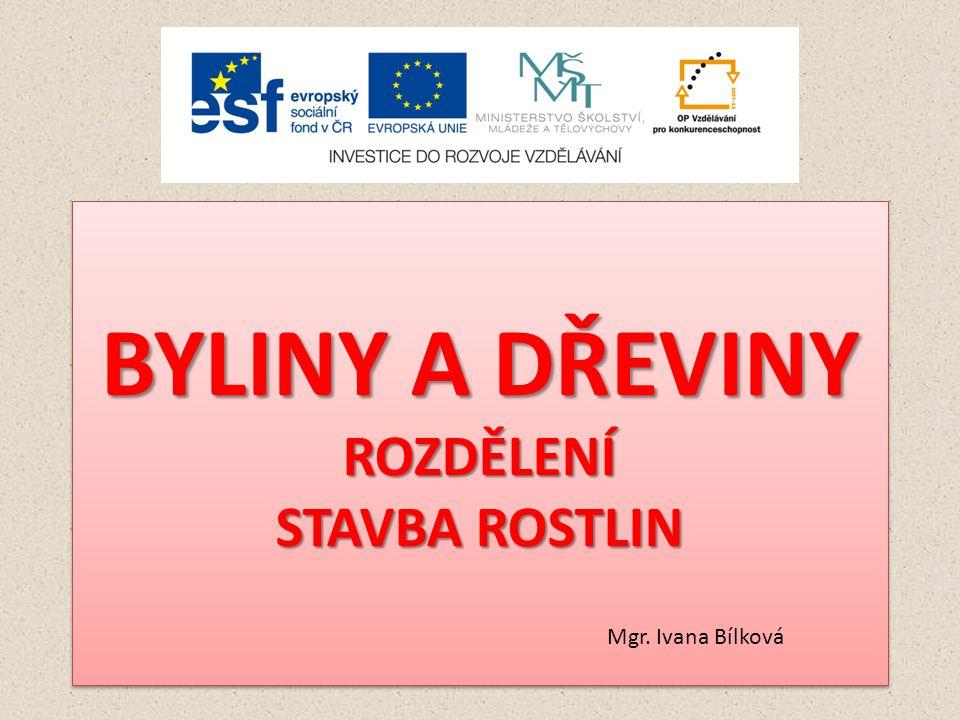 BYLINY A DŘEVINY ROZDĚLENÍ STAVBA ROSTLIN Mgr. Ivana Bílková