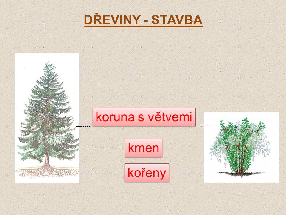 DŘEVINY - STAVBA koruna s větvemi kmen kořeny ------- ------------