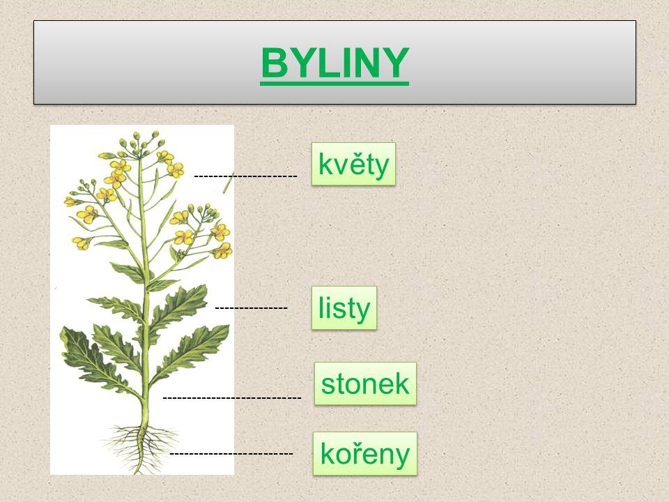 BYLINY květy listy stonek kořeny --------------------- ---------------