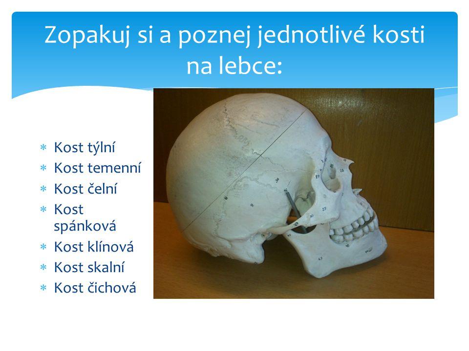 Zopakuj si a poznej jednotlivé kosti na lebce: