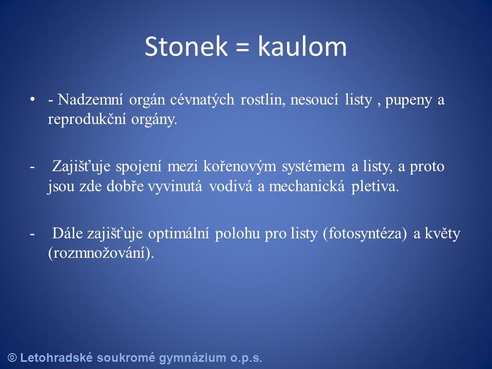 Stonek = kaulom - Nadzemní orgán cévnatých rostlin, nesoucí listy , pupeny a reprodukční orgány.
