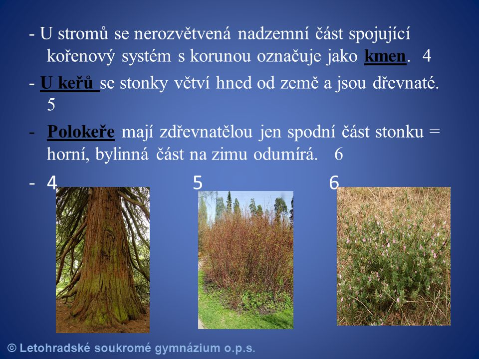 - U stromů se nerozvětvená nadzemní část spojující kořenový systém s korunou označuje jako kmen. 4