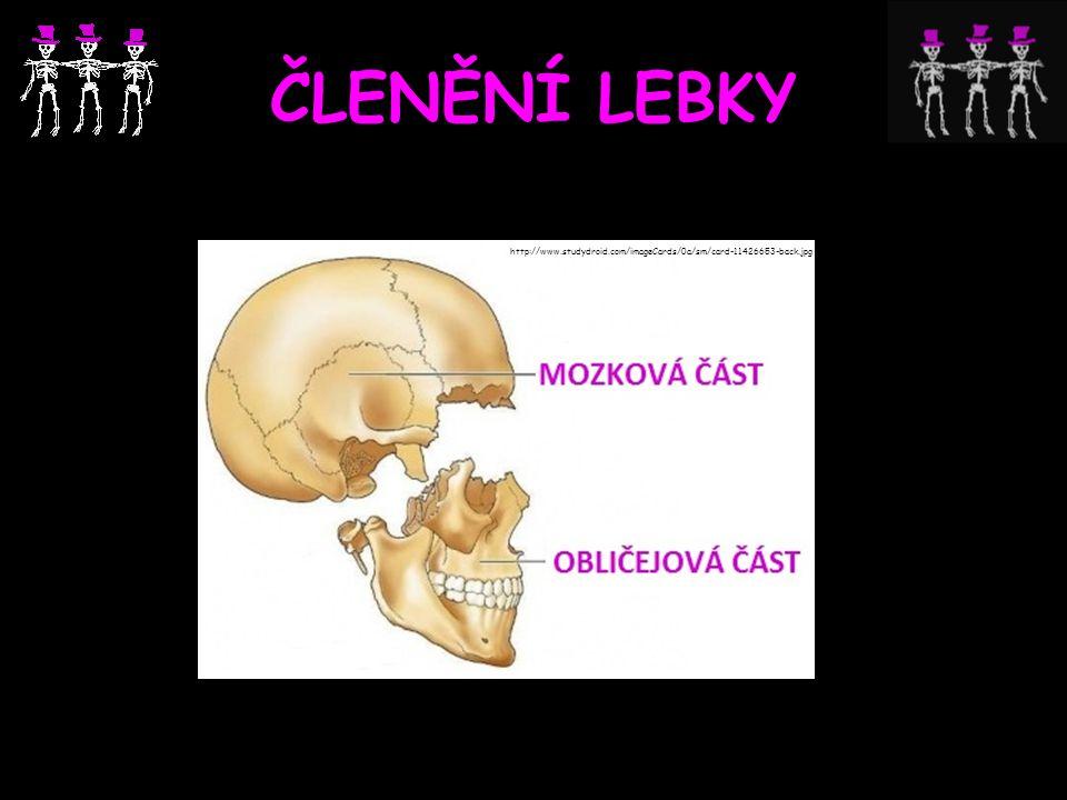 ČLENĚNÍ LEBKY http://www.studydroid.com/imageCards/0a/sm/card-11426653-back.jpg