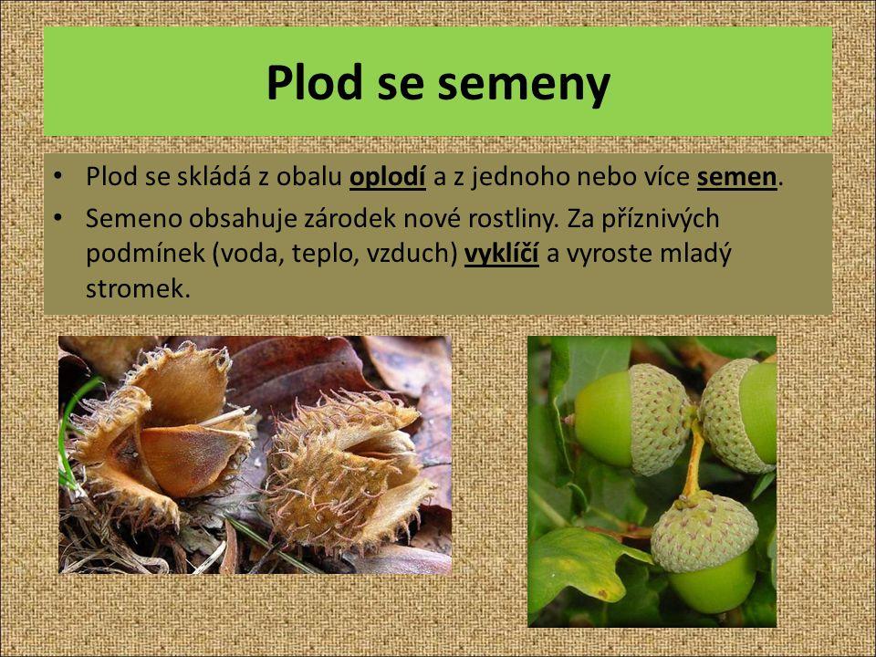 Plod se semeny Plod se skládá z obalu oplodí a z jednoho nebo více semen.