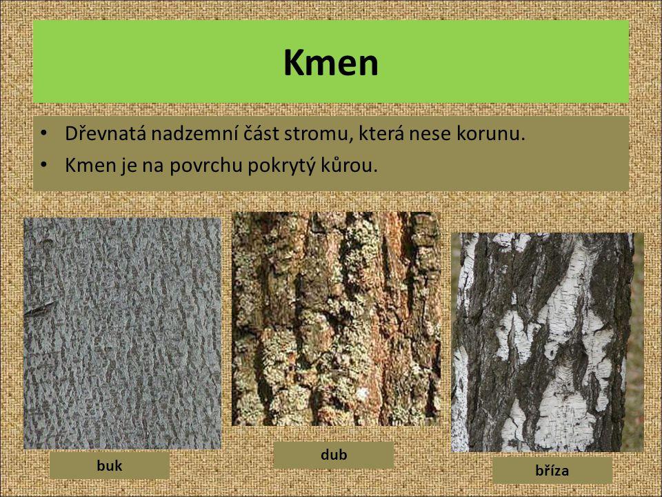 Kmen Dřevnatá nadzemní část stromu, která nese korunu.