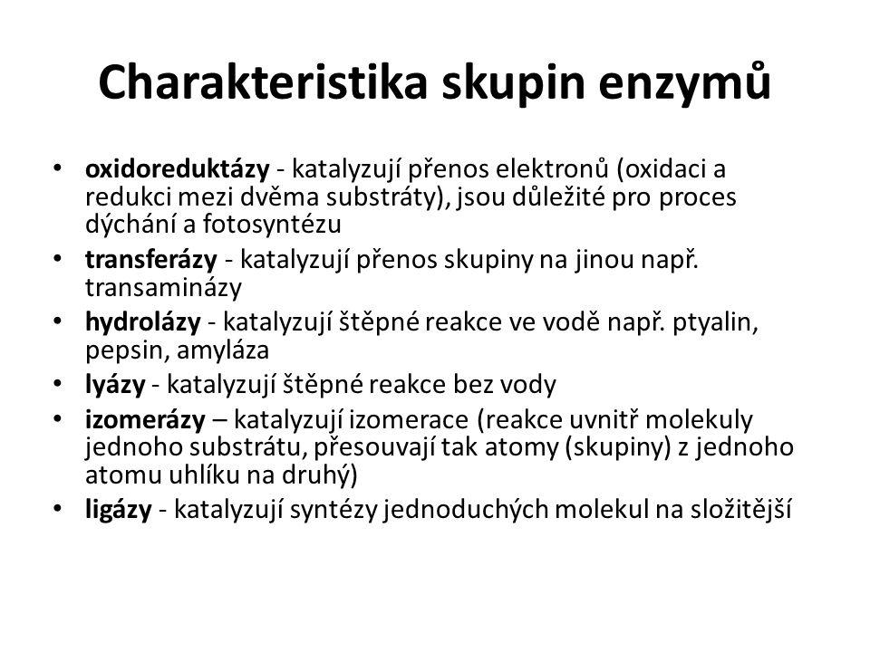 Charakteristika skupin enzymů