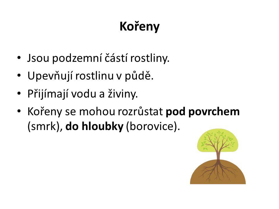 Kořeny Jsou podzemní částí rostliny. Upevňují rostlinu v půdě.