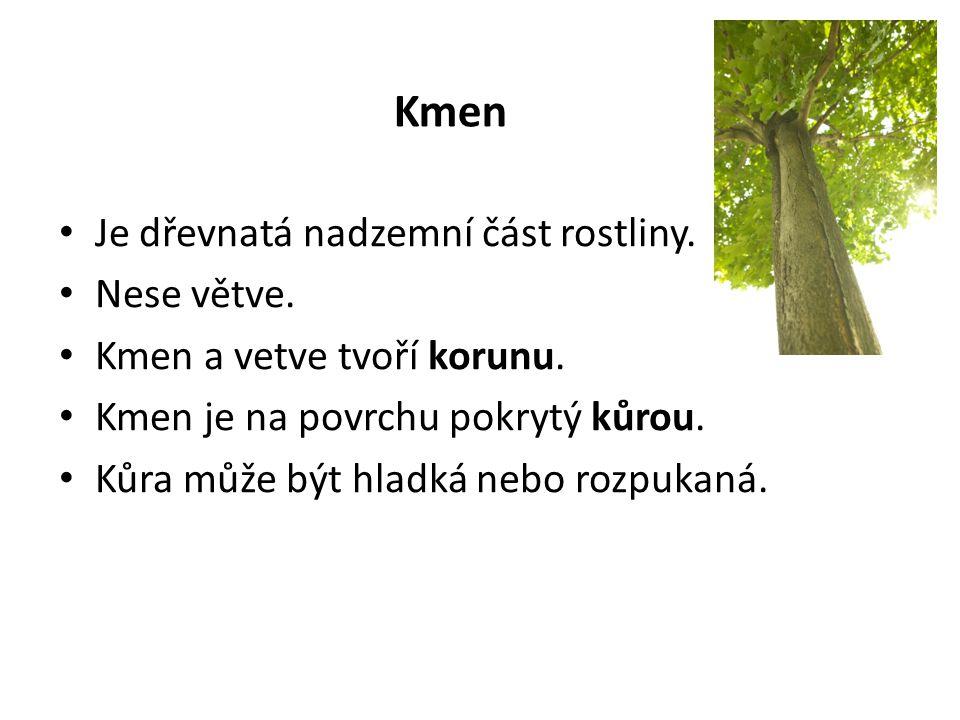 Kmen Je dřevnatá nadzemní část rostliny. Nese větve.