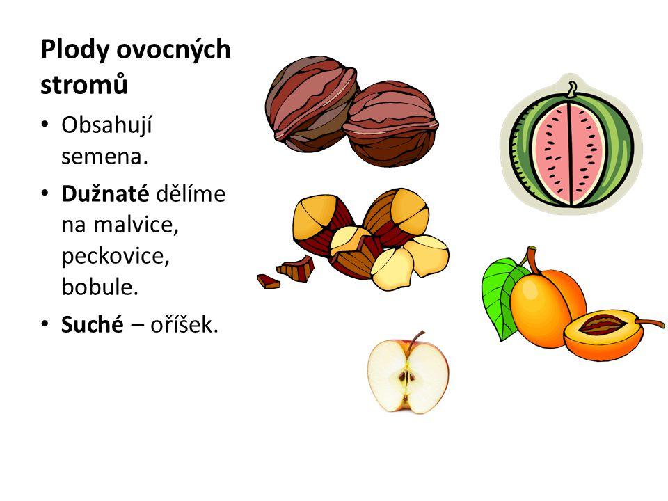Plody ovocných stromů Obsahují semena.